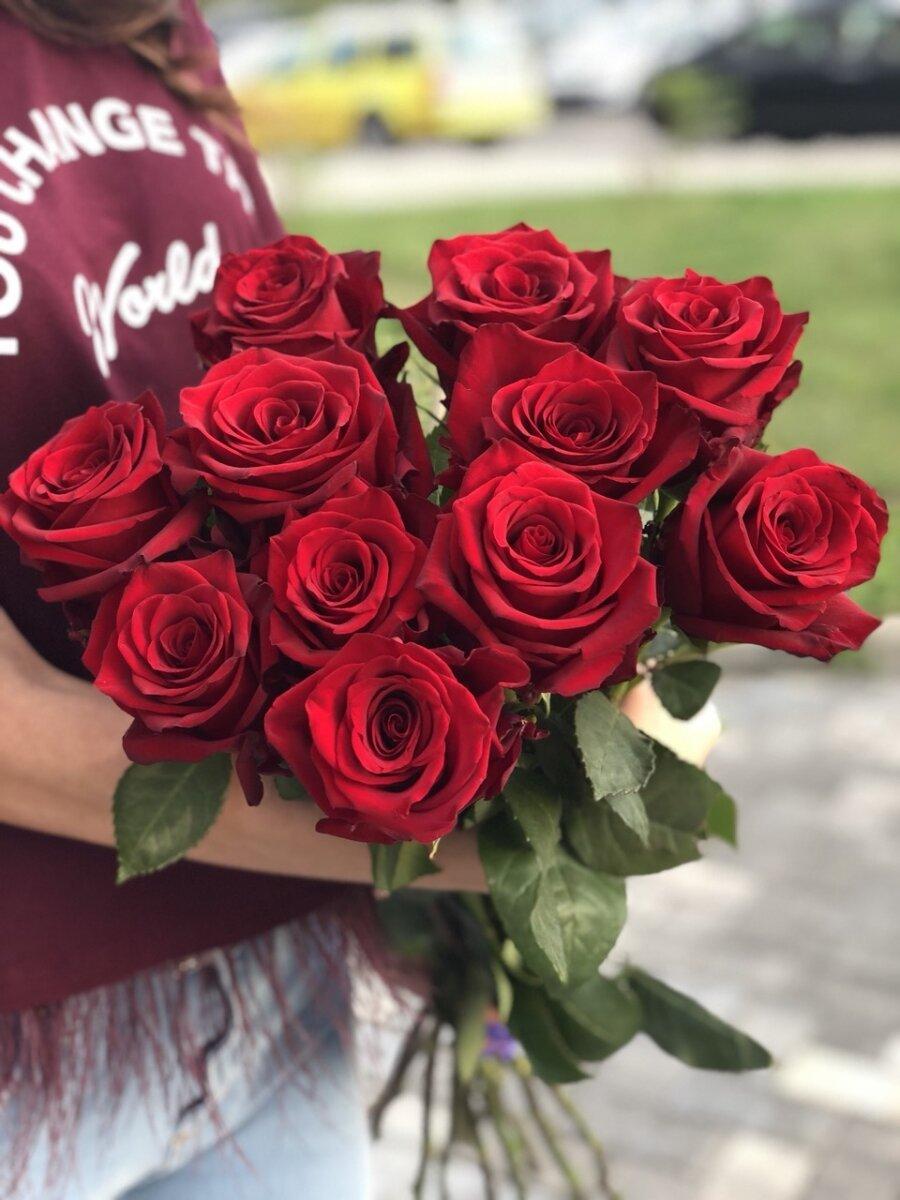 Роза красная  Голландия 60 см