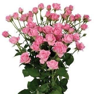 Кустовая роза розовая