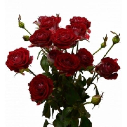 Кустовая роза красная